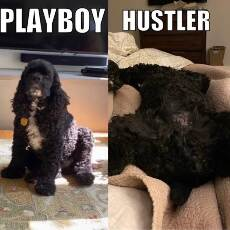 playboy vs hustler