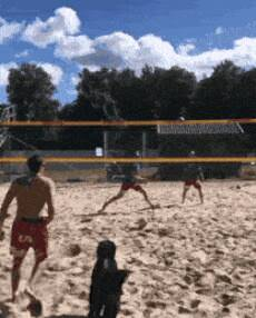 dog playing some volleyball